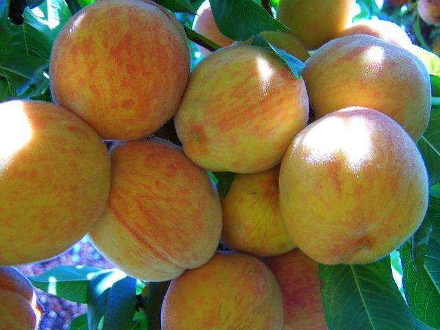 Jak zpracovat ovoce, aby nám vydrželo